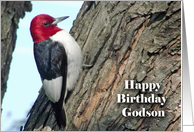 Birthday for Godson, Red-headed Woodpecker in Tree card