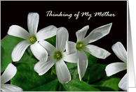 Thinking of My Estranged Mother, White Shamrock Flowers card
