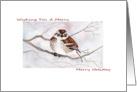 Happy Holidays, Illustrated Sparrow Christmas Card
