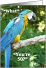 Happy 50th Birthday/Blue Parrot Humor card