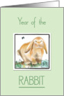 Year of the Rabbit-Chinese New Year card