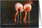 Happy Birthday Twins/ Humor-Flamingos from behind/photography card