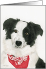 Simon the Border Collie, Blank Note Card