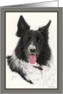 Gus the Border Collie card