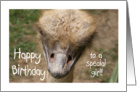 Birthday Ostrich Girl card