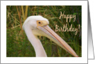 Birthday Pelican General card