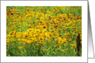 Blank Daisies in field card
