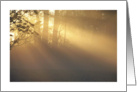 Blank Sunbeams in Fog card