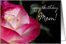 Birthday Rose Mom card
