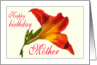 Birthday Daylily Mother card