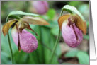 Wild Pink Ladyslipper Flower Photo Blank Note Card