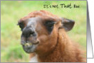 Humorous Llama Nature Getting Older Birthday Card