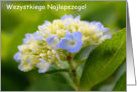 Polish Birthday Greeting Card Baby Hydrangea Flower Photo card