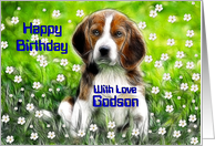 Happy Birthday ~ Godson ~ Daisy May in a field of flowers card