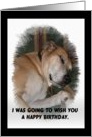 lazy dog - humorous Birthday card