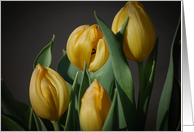 Yellow Tulips Collections Card