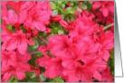 Azalea Easter Card