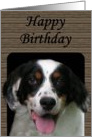 English Setter Birthday Card