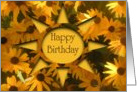 Black-Eyed Susans Birthday Card