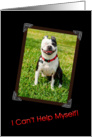 Grinning Boston Terrier Birthday card