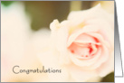 Pink Rose Engagement Congratulations card