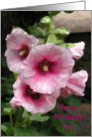 Pink Hollyhocks Mother's Day card