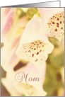 Foxgloves Grandma Birthday card