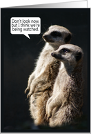Fun Birthday Card With Meerkats - Humour card