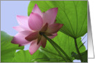 Pink Lotus with leaves card