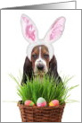 Easter Basset Hound Dog card
