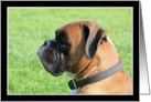 Boxer Dog headshot card