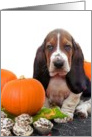 Halloween Basset hound puppy card