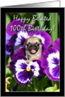 Happy Belated 100th birthday pug puppy card