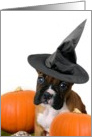 Halloween Boxer puppy with pumpkins card
