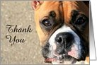 Thank You Boxer dog card
