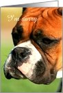 I'm sorry Boxer Dog card
