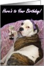 Happy Birthday Olde English bulldogge card