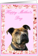 Happy Mother's Day Pit bull card