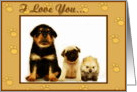 I Love you puppies card