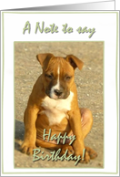 Happy Birthday Pitbull Puppy card
