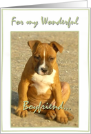 I love you boyfriend Pitbull Puppy card