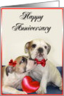 Happy Anniversary bulldogs card
