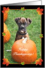Happy Thanksgiving Boxer Puppy card