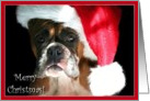 Merry Christmas Boxer in Santa Hat card
