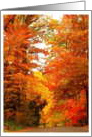 Autumn, Foliage, Leaves, Happy Thanksgiving card