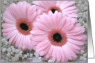 Wedding Invitation - pink Gerberas card