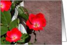 Roses on the Trellis card
