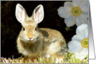 Rabbit Ears card