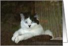 Velveteen Kitty card