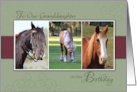 Granddaughter Birthday- Trio of Horses card